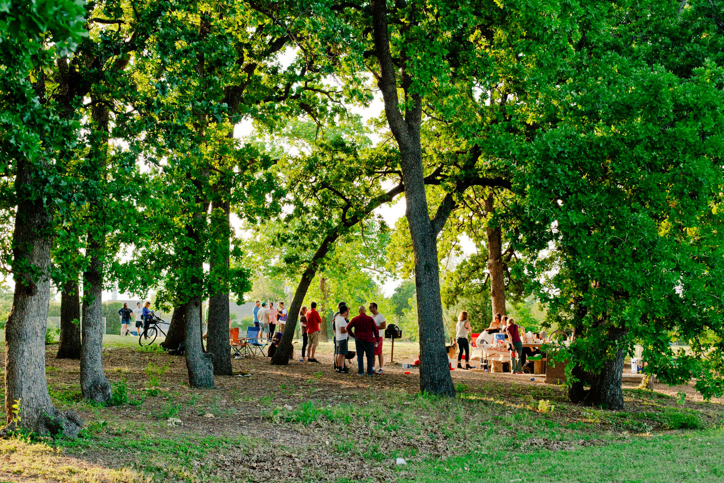 Grove of post oaks at Patterson Park