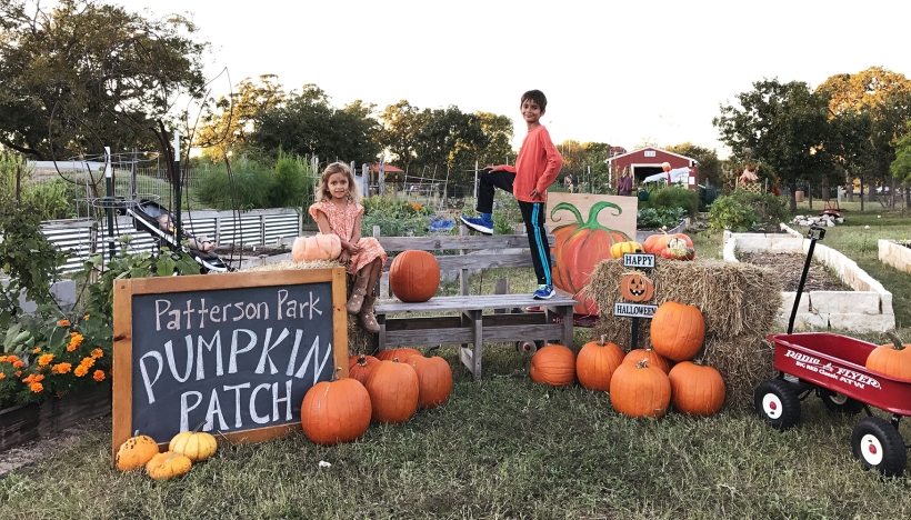 Patterson Pumpkin Patch 2017.Photo by J. Potter-Miller/FoPP.